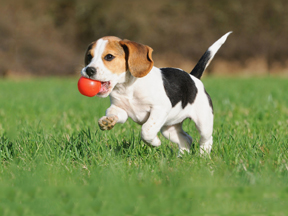 Dog Training - Humane Society for Greater Nashua New Hampshire