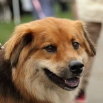 festival_100116_dog-36-150x150