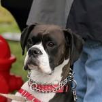 festival_100116_dog-4-150x150