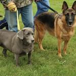 festival_100116_dog-46-150x150
