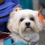 festival_100116_dog-48-150x150