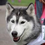 festival_100116_dog-54-150x150