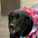 festival_100116_dog-74-150x150