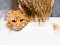 cat being held by owner
