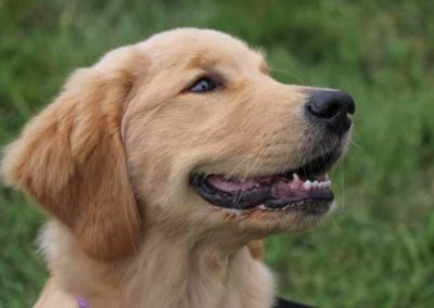 W2W2018-Dogs&Guests055