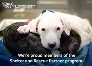 Available Dogs - Humane Society for Greater Nashua New Hampshire